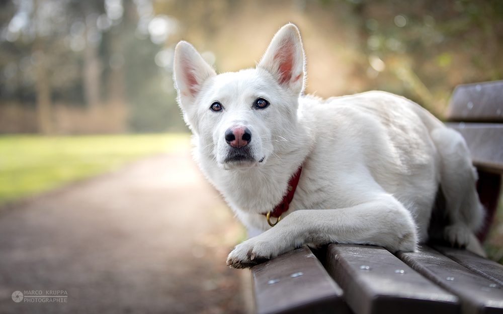 Anna Taeger - Hundeakademie RudelHerzen Stefanie Baumer