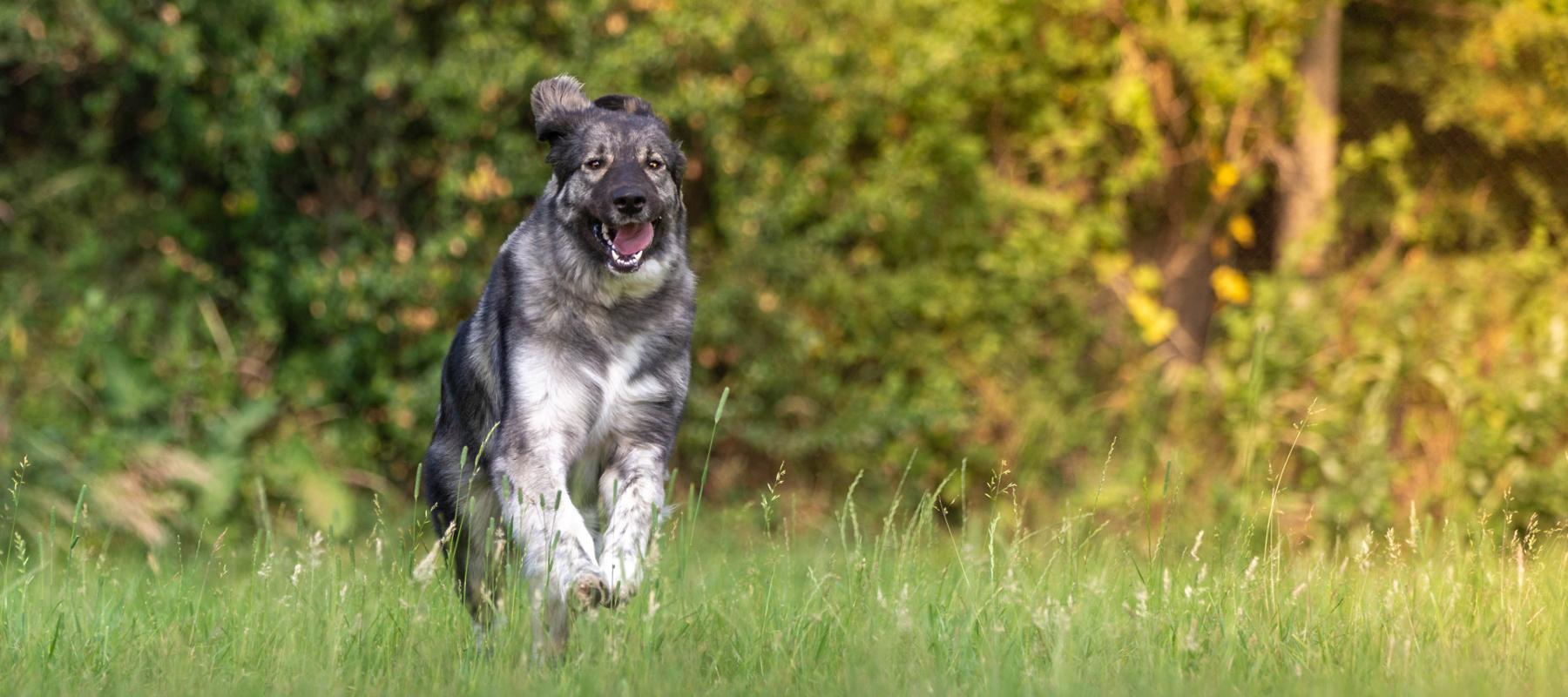 Hundeakademie RudelHerzen Stefanie Baumer