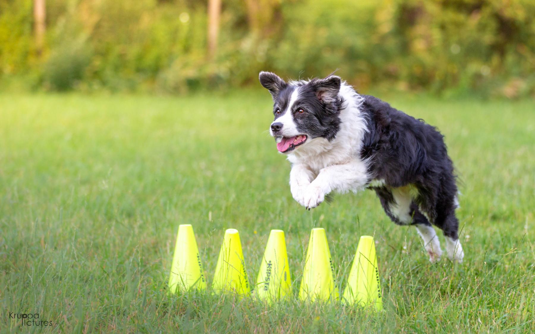 Hundesport - Hundeakademie RudelHerzen Stefanie Baumer