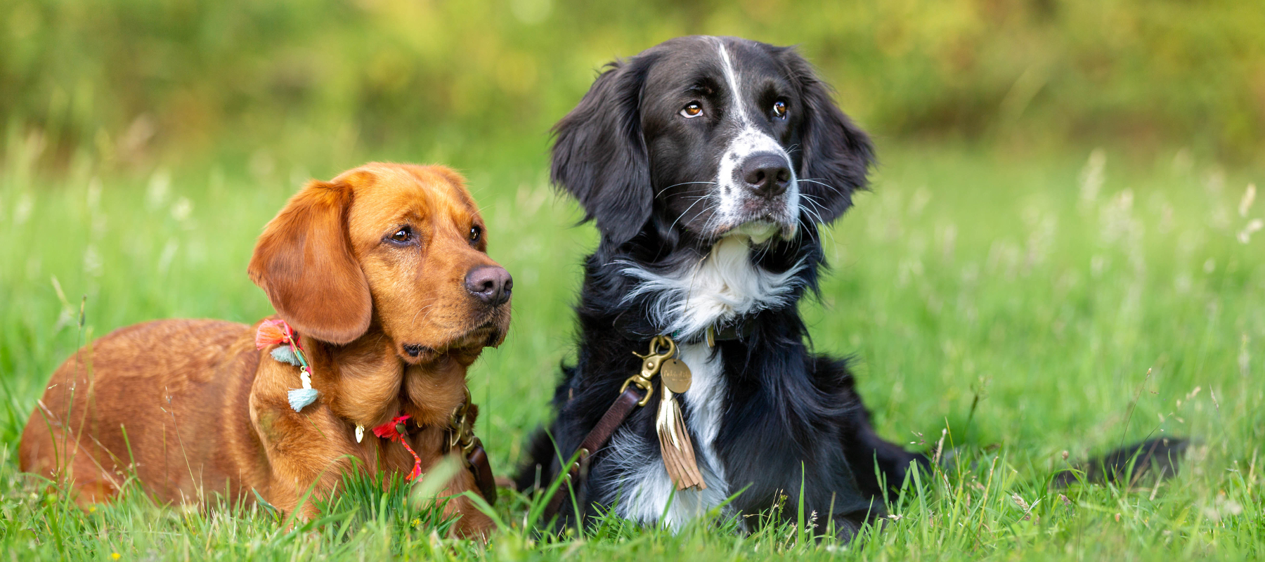 RudelJahr - Hundeakademie RudelHerzen Stefanie Baumer