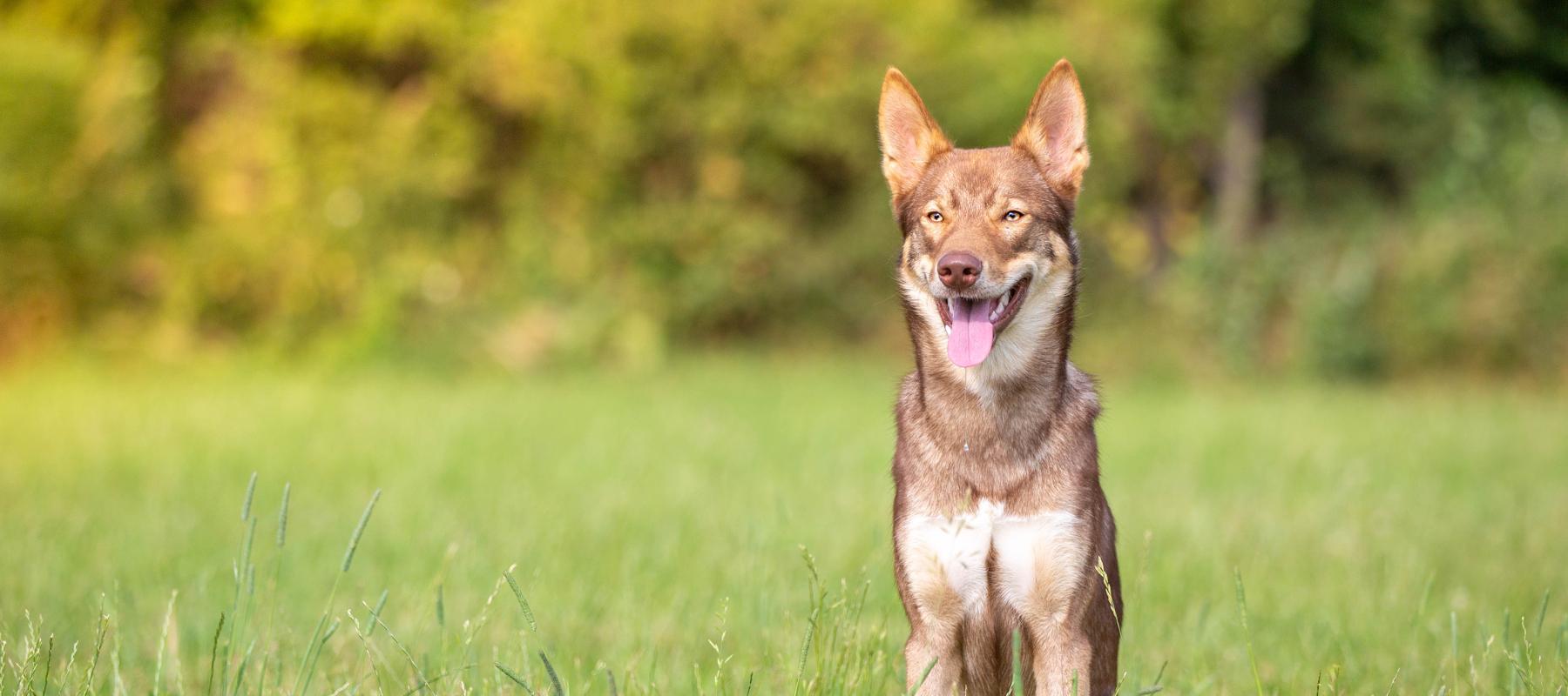 RudelLinks - Hundeakademie RudelHerzen Stefanie Baumer