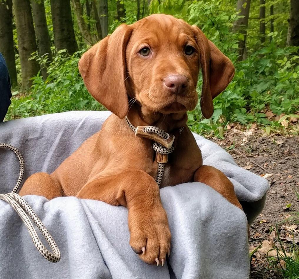 Welpen - Hundeakademie RudelHerzen Stefanie Baumern